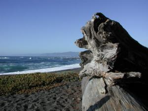 MacKerricher BeachMendocino Coast 2005
